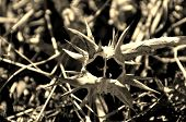 Seed Pod 2