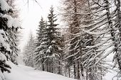 Winter forest with lot of fresh snow