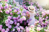 Little Girl Is In Bushes Of Hydrangea Flowers In Sunset Garden. Flowers Are Pink, Lilac, Blue, Laven poster