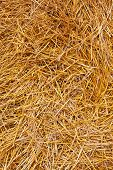 Closeup Of Hay Background