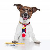 stock photo of working-dogs  - business dog typewriter tie glasses and block - JPG