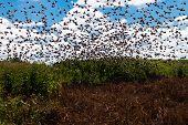 Aves en el campo