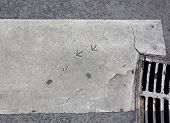 Bird Footsteps On Painted Asphalt