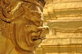 Thai golden giant