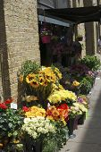 Florist Shop In Southwark. London. UK