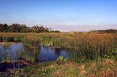 Rohrkolben Marsh