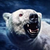 Angry white polar bear with the sharp teeth