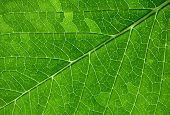 green leaf close up photo