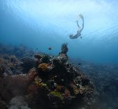 Young lady freediver exploring coral reefs in a tropical sea