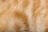 Piel de naranja de gato