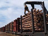 Loading Logs On A Railcar