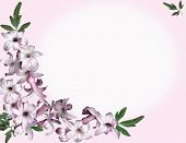 Background Pink Flowers
