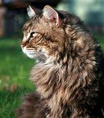 Cat Portait
