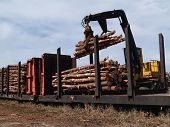 Loading Cut Trees On A Railcar