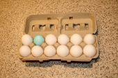 Different Egg