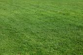 New-mown meadow