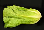 foto of romaine lettuce  - Green Romain lettuce on a black background - JPG