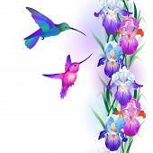 foto of purple iris  - Vector seamless pattern with bright multicolored Iris flowers and hummingbirds - JPG