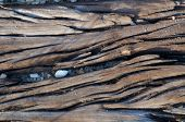 Dried Wood Grain