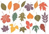 Illustration set of 19 leaves with autumn colors. All objects are isolated and grouped. Colors and t