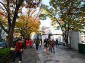 Tokyo - Nov 24: People Shopping Around Omotesando Hills