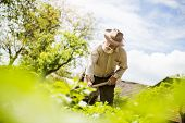 stock photo of hoe  - Old farmer with a hoe weeding in the garden - JPG