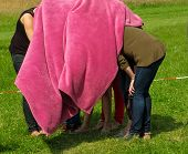 Crowd Women Under  Pink Blanket Hiding  Nature