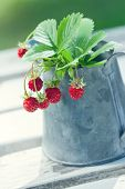 Small Red Wild Strawberries