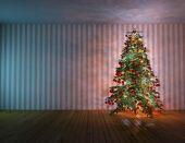 Christmas Tree Fir