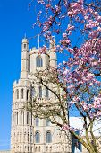 Ely Cathedral In Spring, Apple Blossom