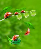Funny picture from nature. Little ladybugs with umbrella jumping down.