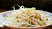 pic of bean sprouts  - Bean sprouts on white plates Mung beans - JPG