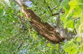Honeycomb On Tree