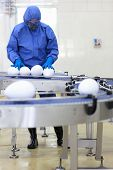 GMO eggs - fully protected in blue uniform engineer working with xxl size eggs at production line
