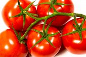 Bunch Of Ripe Fresh Red Tomatoes