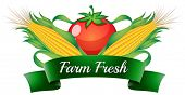 Illustration of a farm fresh label with sweetcorns and a tomato on a white background