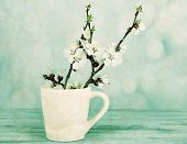 Beautiful apricot blossom in cup on light background