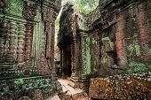 Ta Prohm Temple With Giant Banyan Tree At Angkor Wat Complex, Siem Reap, Cambodia