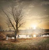 Bird over autumn river