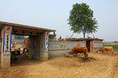 Rural life in China