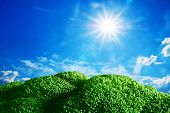 Conceptual field, meadow with broccoli land, grass. Sunny blue sky. Concept of healthy food, vegetable, nutrition, vegetarian etc.