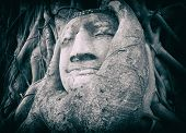 Travel to Thailand, Ayutthaya. Old tree Buddha stone sculpture. Wisdom and pray