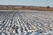 Agricultural field covered by fresh snow