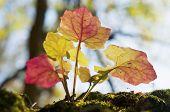 Leaves From Below