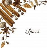 spices drawing by watercolor