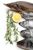 Fresh fish with lemon and rosemary close-up