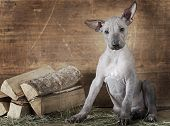 Rural Styled Shot Of A Puppy With Firewood