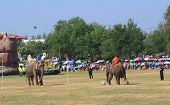 Elephant playing football
