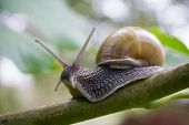 On The Tree Snail