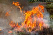 Fires Farmland Crops